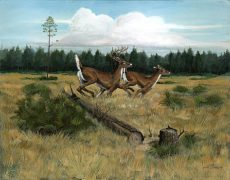 Panhandle Deer by Timothy Tron