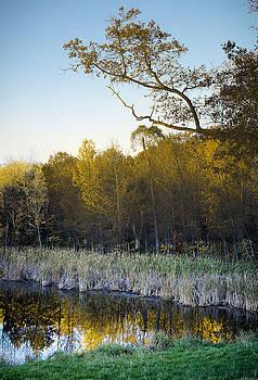 Pano of Tree Reflections by Samantha Boehnke