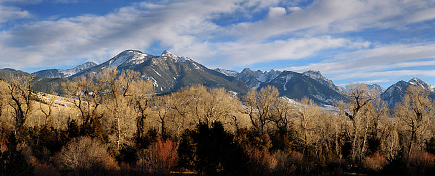 Reimar Gaertner - Panorama of Absaroka Range mountains through Cottonwood trees on