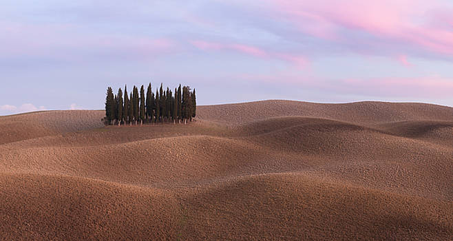 Panorama of cypress grove at the field by Nickolay Khoroshkov