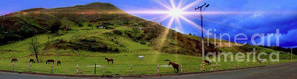Panorama Of Horses Near Nabon by Al Bourassa
