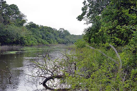Harvey Barrison - Panorama of the Pacaya Samiria National Reserve