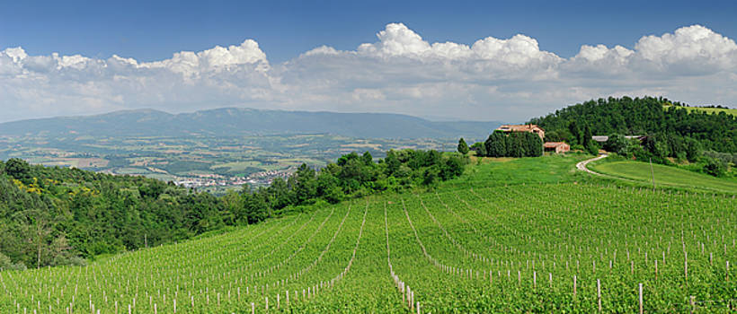 Reimar Gaertner - Panorama of vineyard on Umbrian hillside overlooking Ponterio an