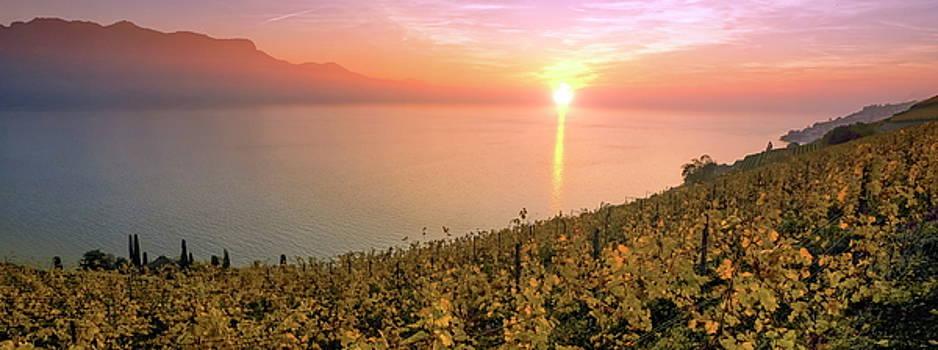 Elenarts - Elena Duvernay photo - Panorama on Lavaux region, Vaud, Switzerland
