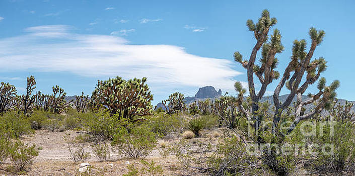 Panoramic View of Desert Landscape with Joshua Tree and Mountain by PorqueNo Studios