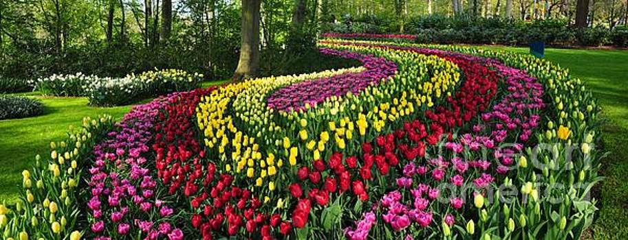 Panoramic view of Tulip Ornamental Garden by Akshay Thaker