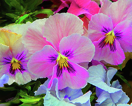 Pansy Flowers  by Susanna Katherine