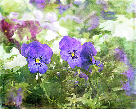 Pansy Impressions by Kim Thompson