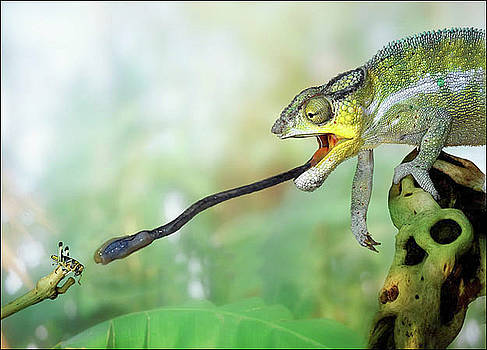 Panther Chameleon by Stephen OHara