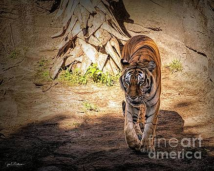 Panthera - Tiger by Jan Mulherin