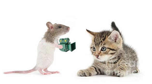 Papa-RAT-zzi by Warren Photographic