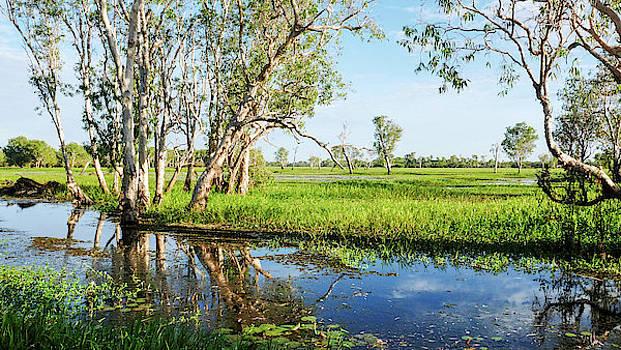 Lexa Harpell - Paper Bark Trees - Yellow Water Billabong, Kakadu National Park