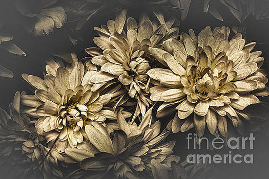 Paper flowers by Jorgo Photography - Wall Art Gallery