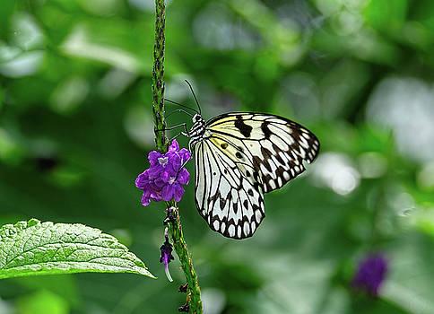 Paper Kite Butterfly portrait by Ronda Ryan