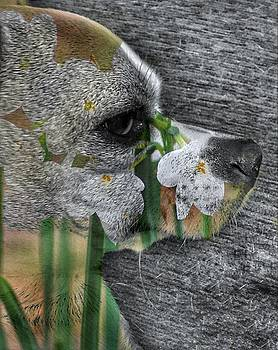 Paperwhites and Puppy by Paul Wilford