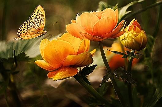 Papillon by Vincent Marguerit