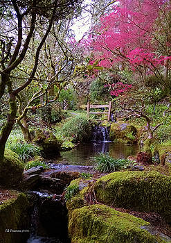 Paradise Found by Edward Coumou