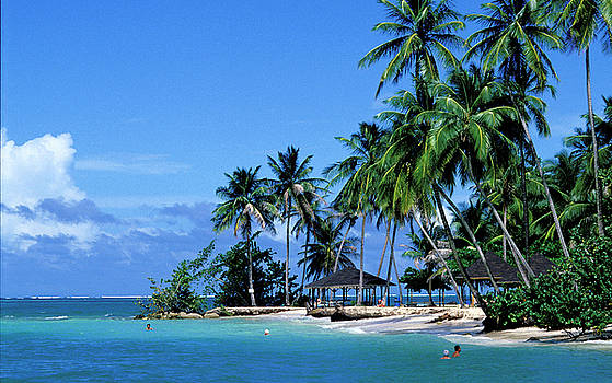 Paradise on Tobago in Caribbean by Carl Purcell
