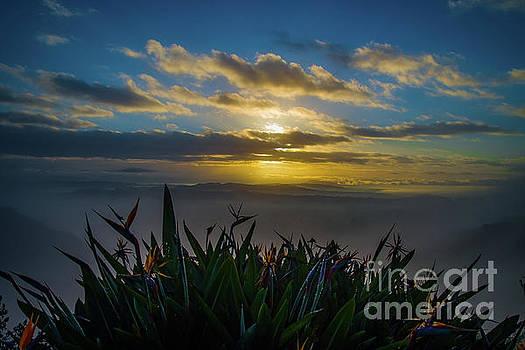 Paradise Sunrise by Gregory Schaffer