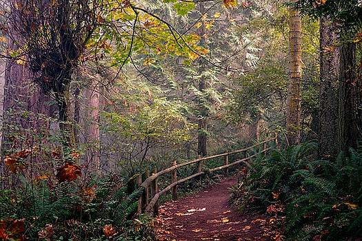 Paradise Trail by Rick Lawler