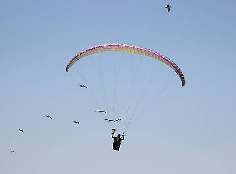 Gary Canant - Paragliding with Pelicans 3