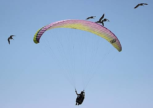 Gary Canant - Paragliding with Pelicans 4