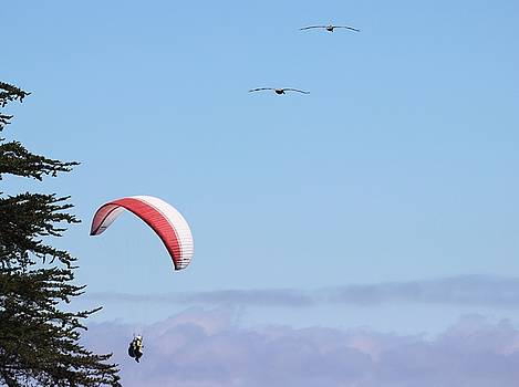 Gary Canant - Paragliding with Pelicans