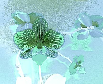 Paris Blue Orchid by Ann Johndro-Collins