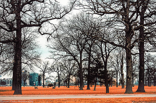 Belle Isle Park View in Detroit  by Maxwell Dziku