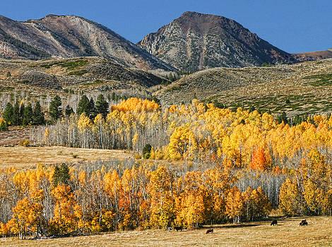 Parker Pass CA by Tom Kidd