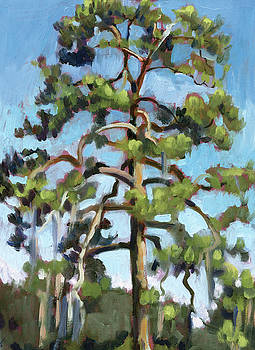 Parking Lot Pine by Stacey Breheny