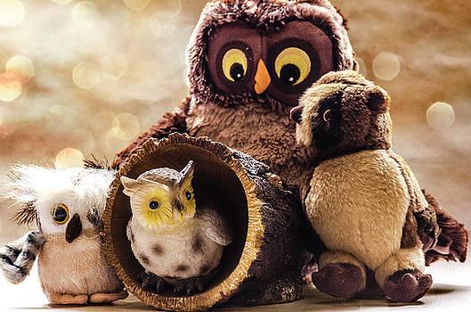 Parliament of Owls by Martina Fagan
