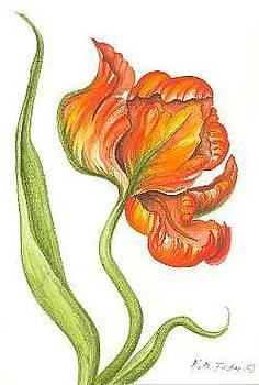 Parot Tulip by Elizabeth H Tudor