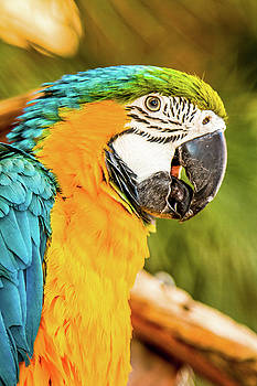Parrot 1 by Hyuntae Kim