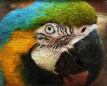 Angela Doelling AD DESIGN Photo and PhotoArt - Parrot
