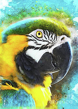Parrot Ara by Justyna JBJart