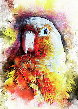 Parrot art by Justyna JBJart