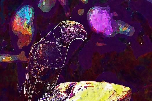 Parrot Bird Nature Color Tropical  by PixBreak Art