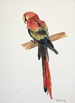 Parrot by Christine Lathrop