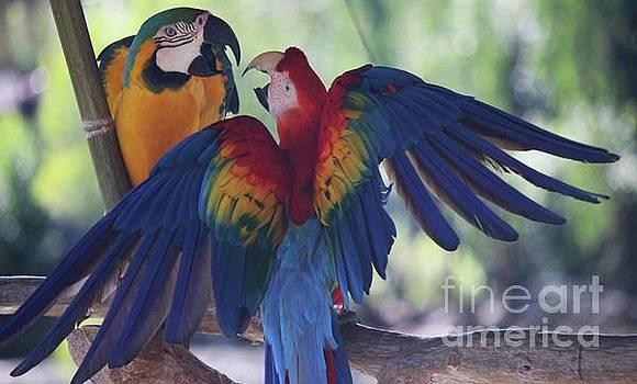 Paulette Thomas - Parrot Fight