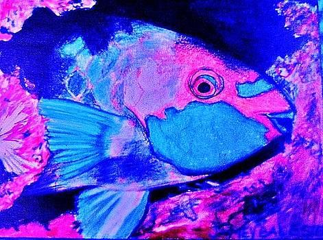 Jamey Balester - Parrot Fish Variation