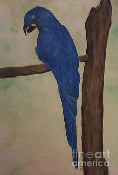 Parrot by Ginny Youngblood