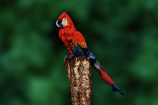 Parrot Bodypainting Illusion by Johannes Stoetter