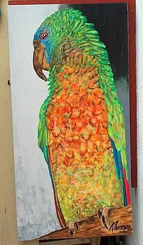 Parrot by Kathleen  Henner