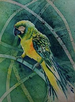 Parrot  by Mary Sue Copeland