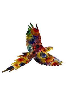 Parrot by Michael Colgate