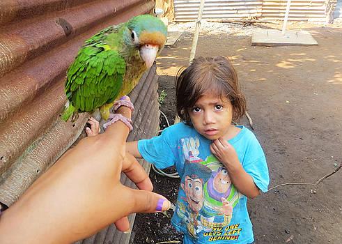 Rosa Angelica - Parrot on Finger