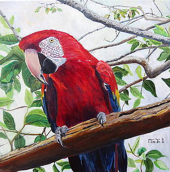 Parrot Portrait by Marilyn  McNish