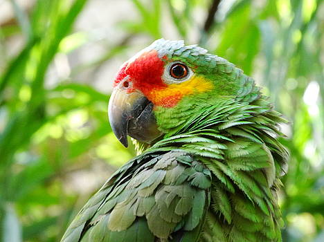 Parrot Pose by Mary Vinagro