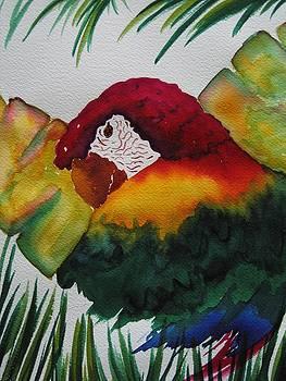 Parrot by Smita Medpalliwar